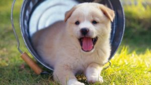 Train your puppy to defecate in the right place